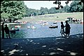The Boating Pond - Greenwich Park c1960 - geograph.org.uk - 197286.jpg