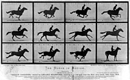 Fra den engelske fotografen Eadweard Muybridges The Horse in Motion.