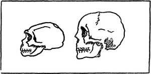 The story of mankind - growth of human skull