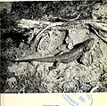 The Victorian naturalist (1968) (14780439594).jpg