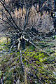 The Witches' Tree (17100126436).jpg