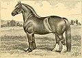 The breeds of live stock, and the principles of heredity (1887) (14594431220).jpg