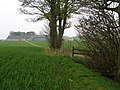 The edge of square plantation - geograph.org.uk - 408065.jpg