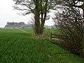 The edge of square plantation - geograph.org.uk - 408065.jpg