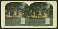 The law library, Cambridge, Mass, from Robert N. Dennis collection of stereoscopic views 3.png