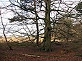 The woodland edge - geograph.org.uk - 1088285.jpg