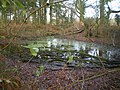 Tiny pond in the copse at Stanton - geograph.org.uk - 1619948.jpg