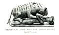 Tipu's Tiger Short History 1903.png