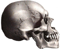 Tlahuica Mexican Mongoloid American Indian skull.png