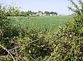 Towards Beverston Castle - geograph.org.uk - 488415.jpg