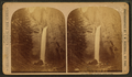 Tower Falls, by Ingersoll, T. W. (Truman Ward), 1862-1922 2.png