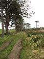 Track leading towards Trsyglwyn Isaf Farm - geograph.org.uk - 1277895.jpg