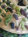 Traditional grape cultivars 2.jpg