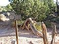 Trail Junction - Flickr - brewbooks.jpg