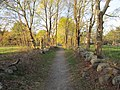 Trail off North St, Willards Woods, Lexington MA.jpg