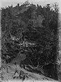 Transporting kauri logs (AM 88392-1).jpg