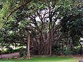 Tree Botanic Garden - panoramio.jpg