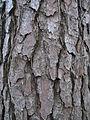 Tree Types and Barks 004.jpg