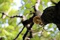 Tree mushrooms (15330865212).jpg