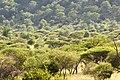 Trees (2355679140).jpg