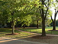 Trees at UMW.JPG