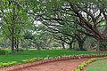 Trees in a Mysore city park.jpg