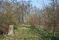 Trig point in woodland - geograph.org.uk - 383303.jpg