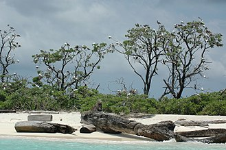Tubbataha Reef - Tubbataha Reefs Natural Park, driftwood, palms, and birds