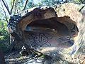 Turtle Rock, Karloo Track.jpg