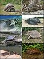 Turtles-Tortoises-Terrapins.jpg