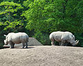 Two-rhinoceros-in-Copenhagen-zoo.jpg