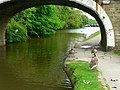 Under Scourer Bridge, Leeds and Liverpool Canal - geograph.org.uk - 1344536.jpg