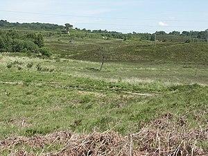 Upton Heath - Typical countryside on Upton Heath