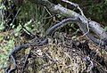 Upturned tree root wad NBG LR.jpg