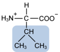 Valine w functional group highlighted.png