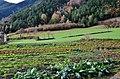 Vall de Sorteny (Ordino) - 41.jpg