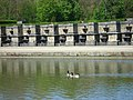 Vaux le Vicomte (1342593803).jpg