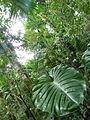 Vegetación de la Reserva de la Biosfera La Amistad Panama (RBLAP) 16.JPG