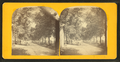 View of a tree-line road, from Robert N. Dennis collection of stereoscopic views.png