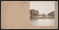 View of trees, by DeMott, S., fl. 1880-1899.png