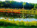 Vilas Park Lagoon - panoramio (4).jpg