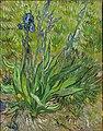 Vincent van Gogh, Iris, 1889. National Gallery of Canada.jpg