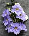 Vineflower.jpg