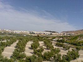 Vista de Estepa y sus campos.