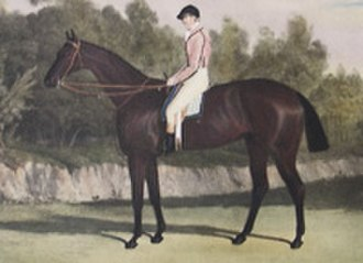 Blacklock (horse) - Blacklock's son Voltaire