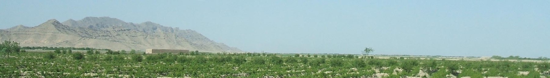 WV banner South Afghanistan Grape vineyards in Kandahar province.jpg