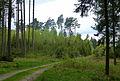 Wald bei Mödishofen 03.jpg