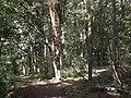 Waldwegen im Grunewald (Woodland Paths in Grunewald) - geo.hlipp.de - 28126.jpg