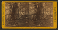 Wandering Willie's Spring, from Robert N. Dennis collection of stereoscopic views 3.png