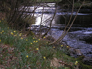 Warche - Spring in the Warche valley